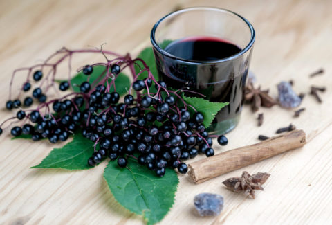 How to Use Elderberry for Cold and Flu Season