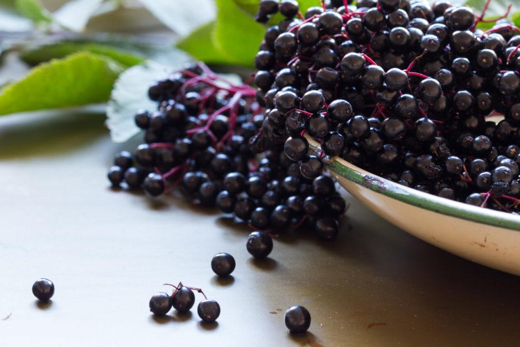 Elderberry for immunity